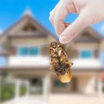 Remedies to Get Rid of Household Insects