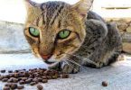 vet recommended cat food