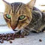 Boost Your Cat's Health, Vet recommended To Do This
